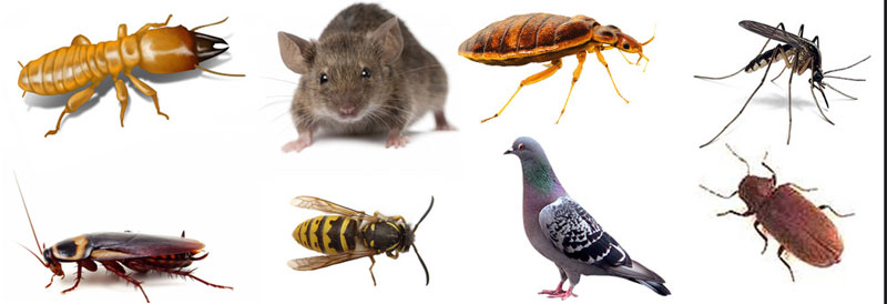 Pest Control Rose Valley