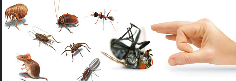 Pest Control Maddens Plains