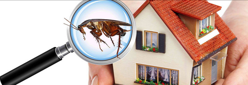 Pest Control Claremont Meadows