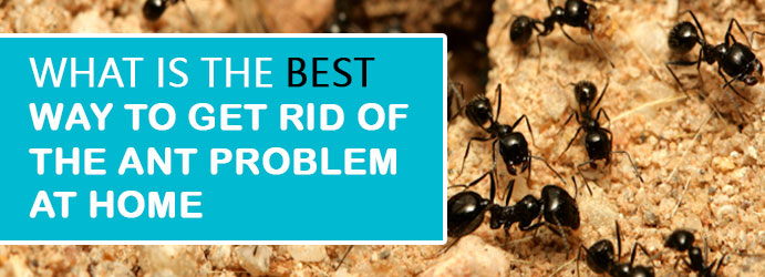 What is the Best way to Get Rid of the Ant Problem at Home