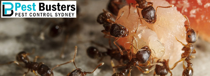 Ant Control Warragul West