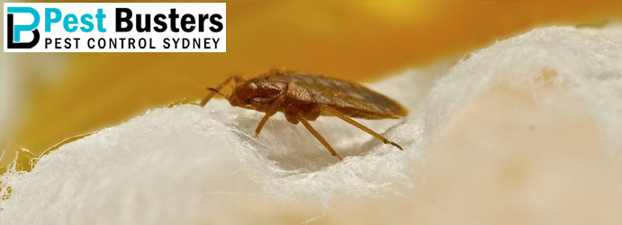 Bed Bugs Control Olivers Hill