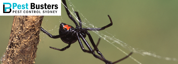 Spider Pest Control Edinburgh