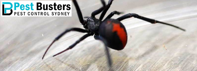 Spider Pest Control Macquarie Links