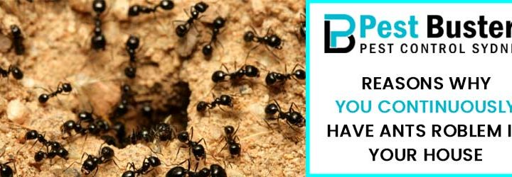 Reasons Why You Continuously Have Ants Problem in Your House