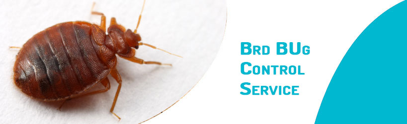 Bed Bug Control Service