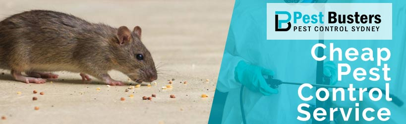 Cheap Pest Control Services