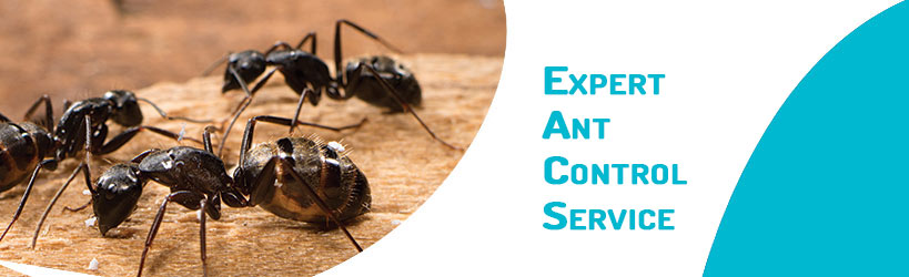 Expert Ant Control Service