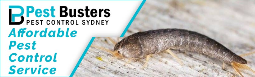 Silverfish Pest Control Services