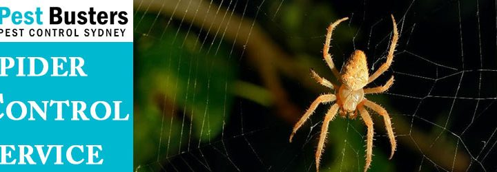 How to Get Rid Of Spiders Safely From Each Corner of the House