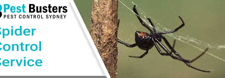 How Hot Water is Useful for Controlling Spiders?
