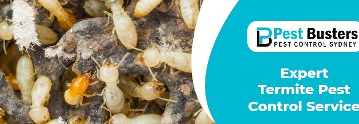 Select The Best Pest Control Service for Termite Removal