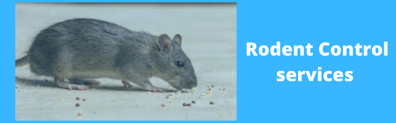 COMMON SIGNS OF RODENT INFESTATIONS AND MICE INFESTATIONS