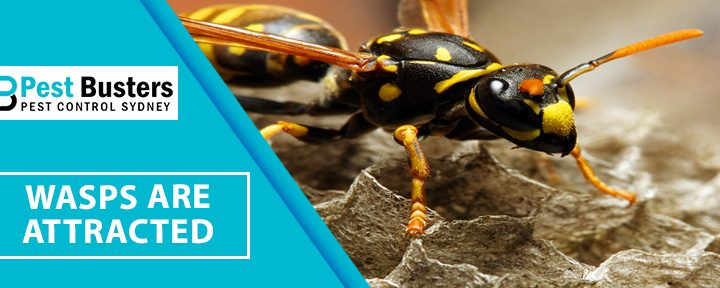 Why Wasps Are Attracted To Your Home?